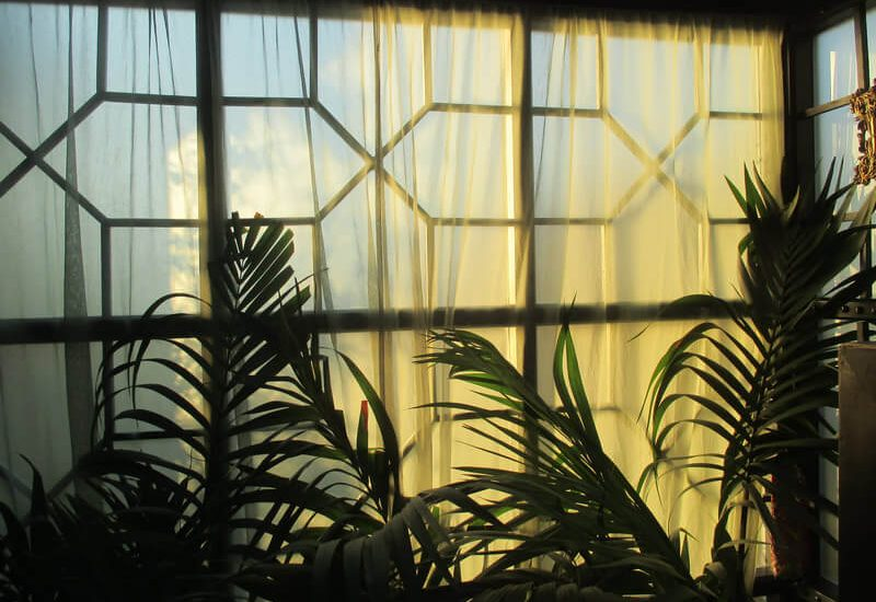 window with net curtains and green plants